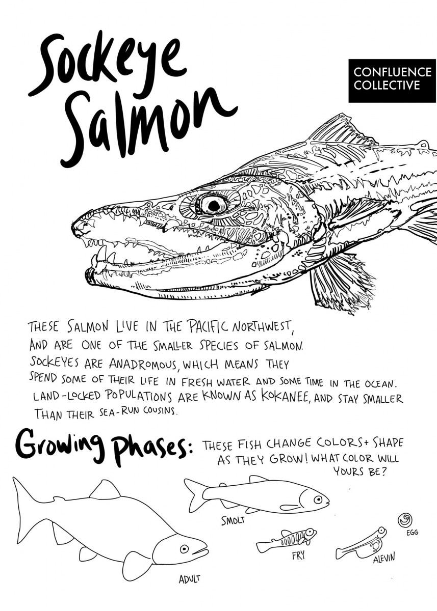 salmon coloring book pages | Athabascan Winter Studies - ANE ... | 1200x857