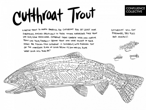 Cutthroat_coloringpage-handout-scaled