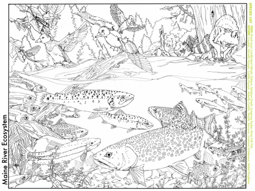 Maine-river-ecosystem_coloringbook-handout-scaled