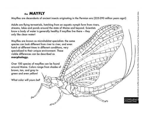 Mayfly-coloringpage-handout