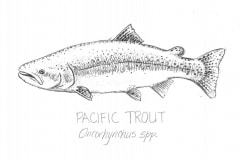 Pacific-trout-illus-GuidoRahr