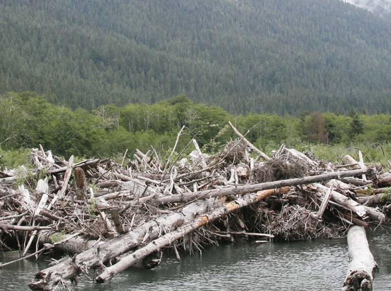 Quinault River Washington log jam