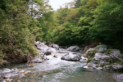 Sarufutsu Environmental Conservation Forest, Hokkaido, Japan