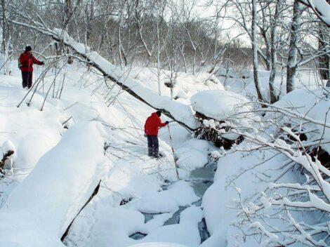 Research in Sarufutsu Environmental Conservation Forest, Hokkaido, Japan