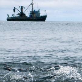 Sakhalin fisheries