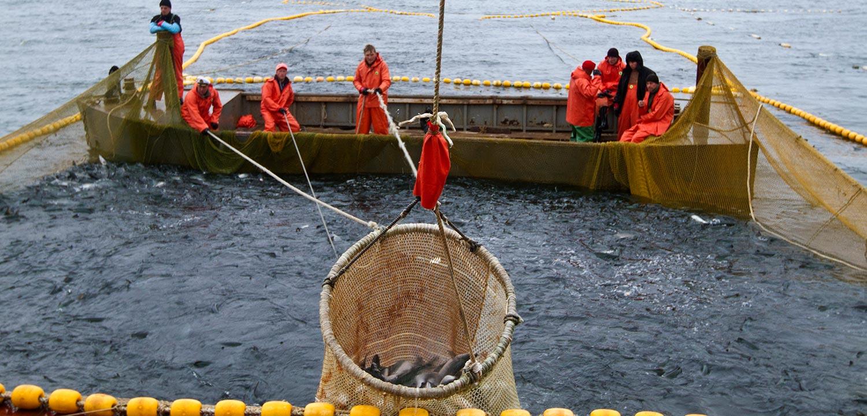 Coastal set net