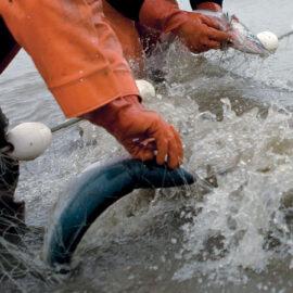 Bristol Bay fishing