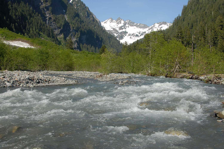 Upper Quinault, Enchanted Valley, Olympic Peninsula, Washington