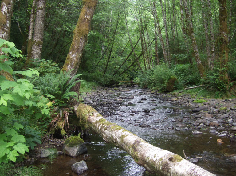 Kilchis River in Oregon's Tillamook State Forest