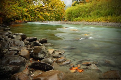 Elwha River in fall