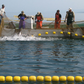 Sakhalin Fisheries Visit