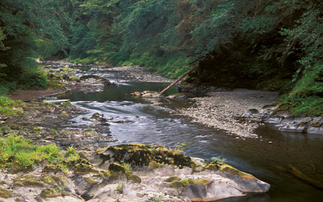 Calawah River, Olympic Peninsula, Washington.