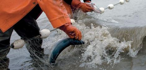 Bristol Bay fishery