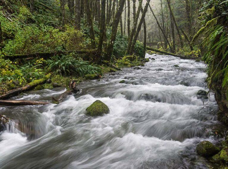 Idiot Creek Oregon