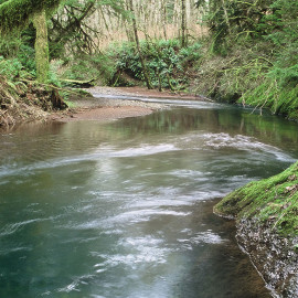 Stream in Oregon's Tillamook State Forest