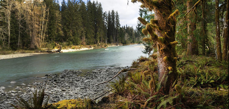 Queets River, Olympic Peninsula, Washington