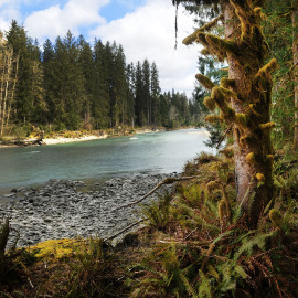 Queets River, Olympic Peninsula, Washington