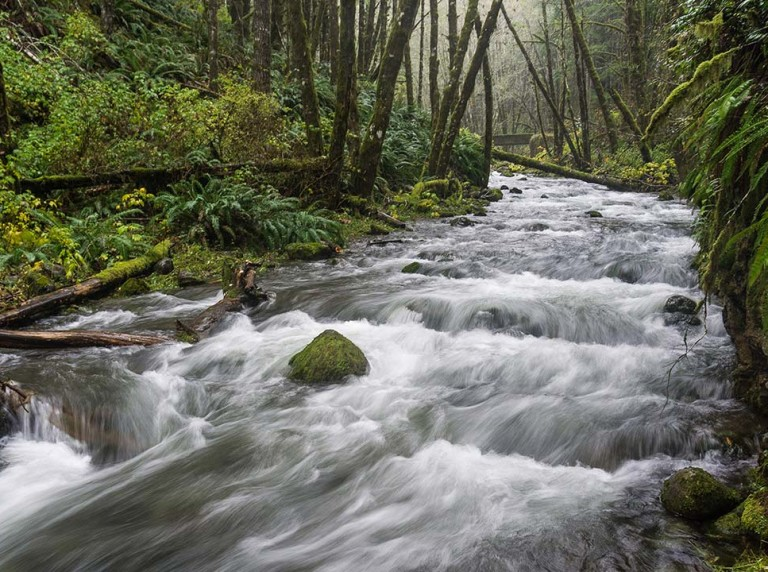 Idiot Creek, a tributary of the Wilson River, Oregon