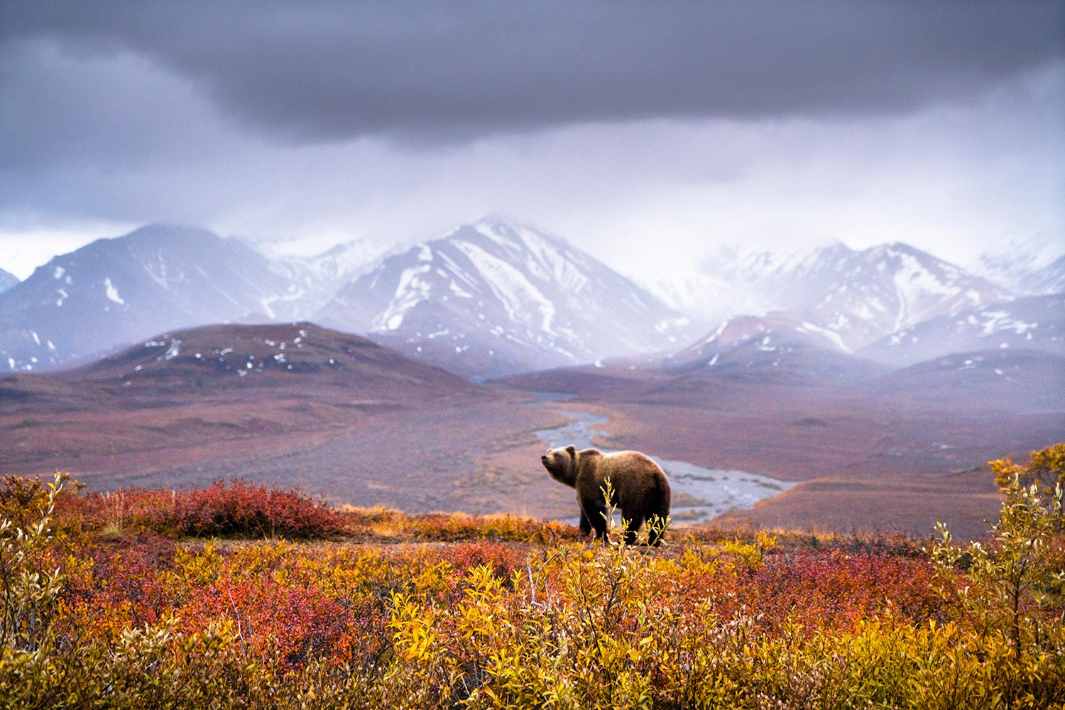 Chris Burkard, Denali National Park Grizzly, Alaska