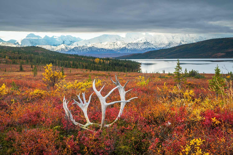 Chris Burkard, Denali National Park, Alaska