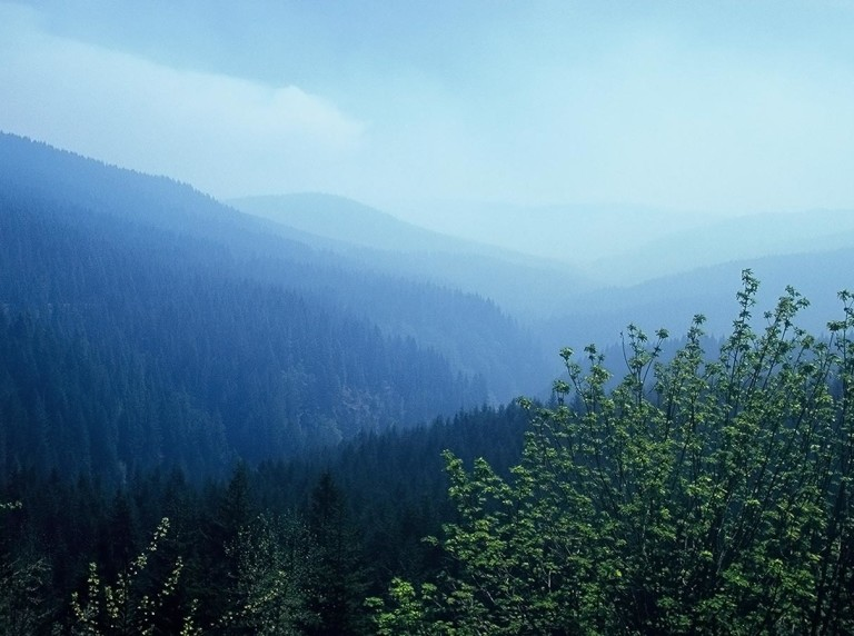 Salmonberry landscape Oregon Coast Range