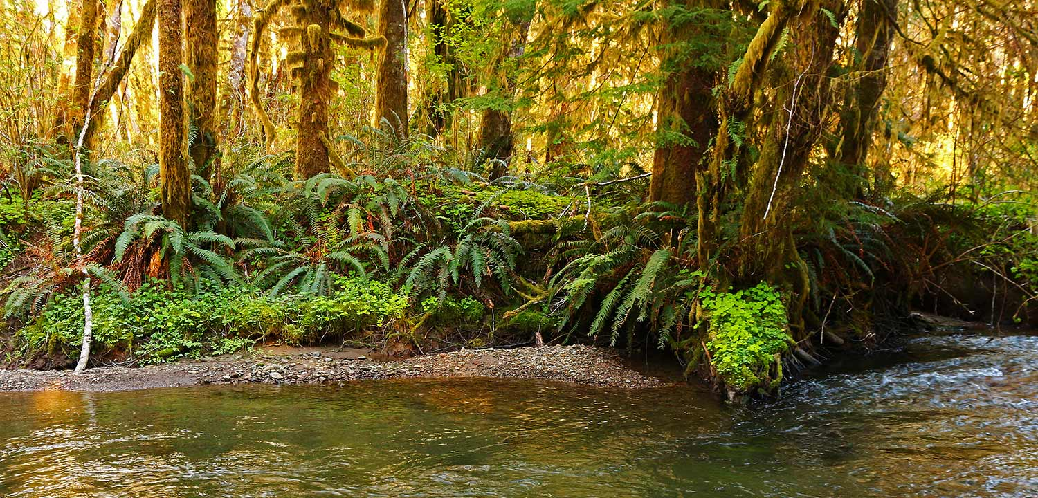 Elk Creek, Olympic Peninsula, Washington