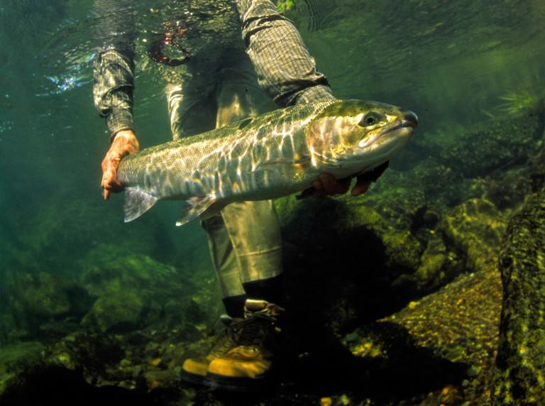 Man holding fish underwater
