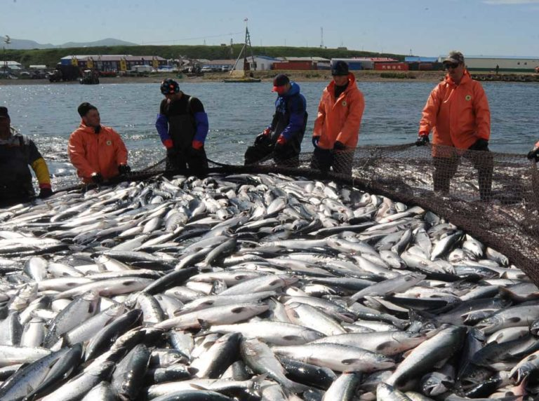 Commercial fishing in Kamchatka