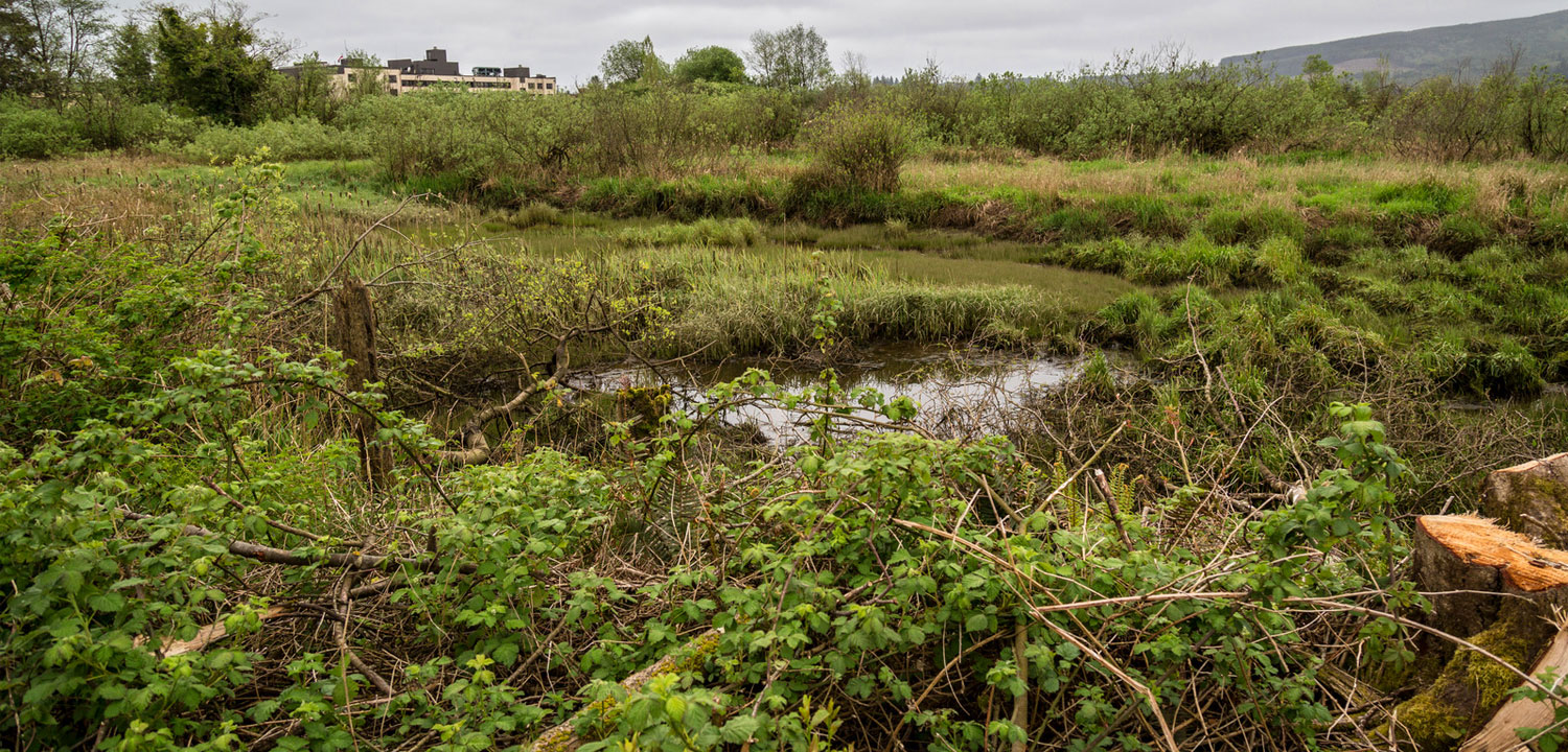 A five-year scientific monitoring program on the project site will document the use of the restored wetlands by juvenile coho salmon. Photo by Ross Photography, courtesy of Tillamook County.