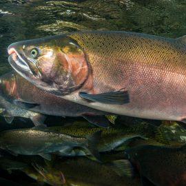 Oregon Coast - Wild Salmon Center