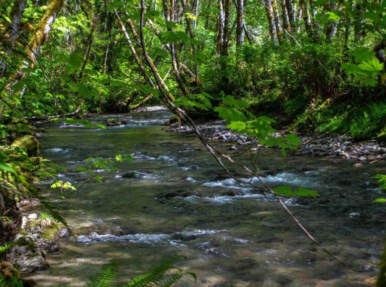 Quillayute River, Washington