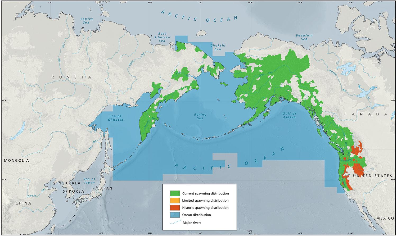 Chinook Distribution