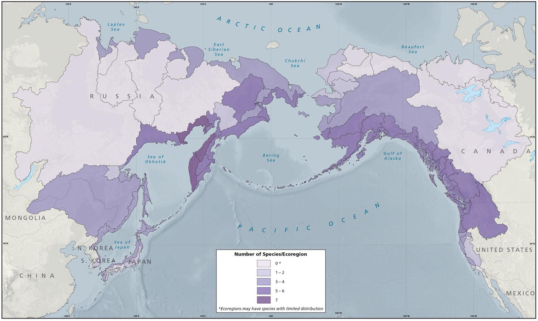 Salmon Diversity by Ecoregion